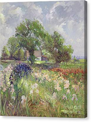 Gorgeous View Canvas Print - White Barn And Iris Field by Timothy Easton