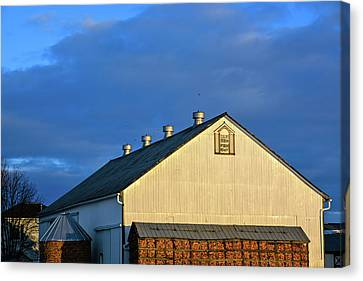 White Barn At Golden Hour Canvas Print