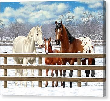 White Bay Appaloosa Horses In Snow Canvas Print