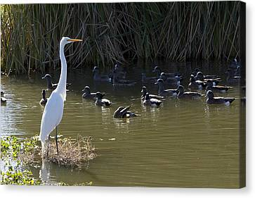 Canvas Print featuring the photograph White Beauty by Phyllis Denton