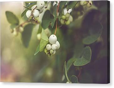 White Berries Canvas Print by Cindy Grundsten