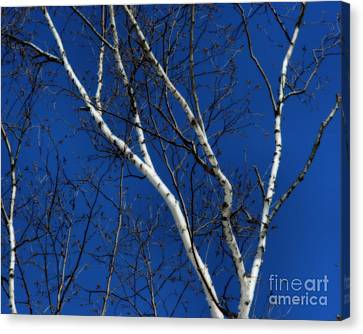 White Birch Blue Sky Canvas Print by Smilin Eyes  Treasures