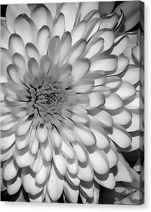 White Bloom Canvas Print