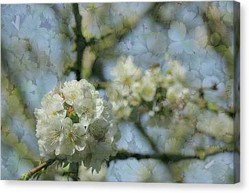 White Blossom Flowers With Leaves Texture Background Canvas Print