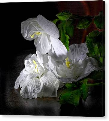 White Blossoms Canvas Print by Robert Och