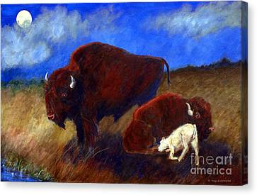 White Buffalo Calf Canvas Print by Doris Blessington