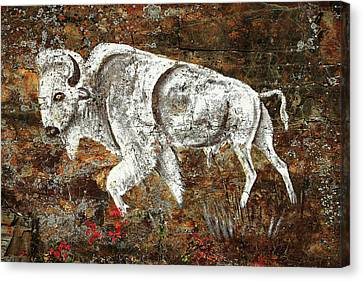 White Buffalo Canvas Print by Todd Klassy