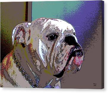 House Pet Canvas Print - White Bulldog by Charles Shoup