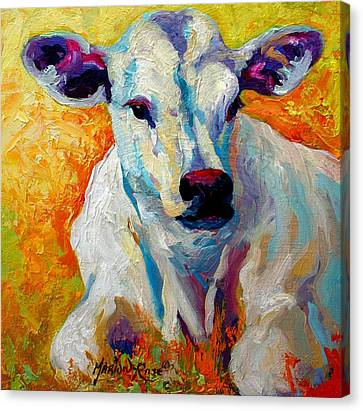 Farm Animal Canvas Print - White Calf by Marion Rose