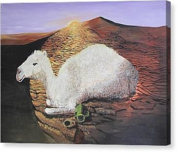 White Camel  Canvas Print by Aleta Parks