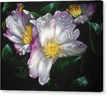 White Camellias On Black Canvas Print by Christopher Reid