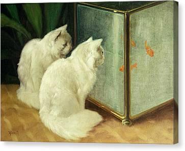 The White House Canvas Print - White Cats Watching Goldfish by Arthur Heyer