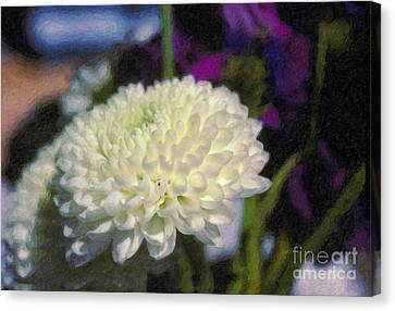 Canvas Print featuring the photograph White Chrysanthemum Flower by David Zanzinger