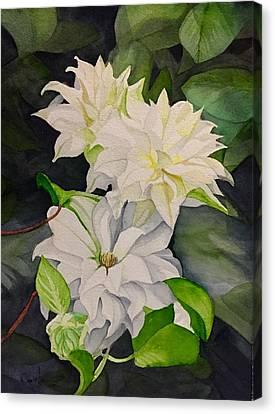 David Hoque Canvas Print - White Clematis by David Hoque