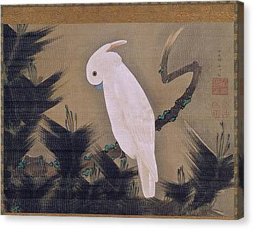 White Cockatoo On A Pine Branch Canvas Print