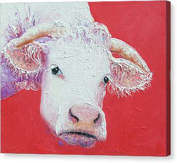 White Cow With Horns Canvas Print