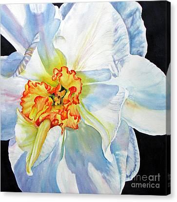White-daffodil Canvas Print by Nancy Newman