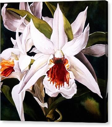 Alfred Ng Art Canvas Print - White Dendrobium Orchid by Alfred Ng