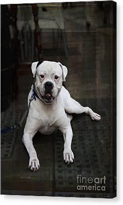 White Dog - Malaga Spain Canvas Print