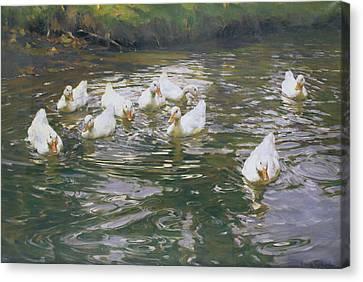 White Ducks On Water Canvas Print by Franz Grassel