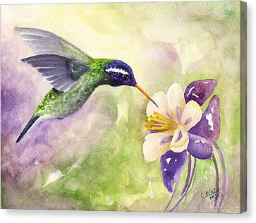 White-eared Hummingbird Canvas Print by Art by Carol May