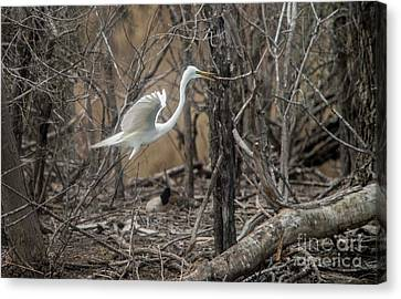 Canvas Print featuring the photograph White Egret by David Bearden