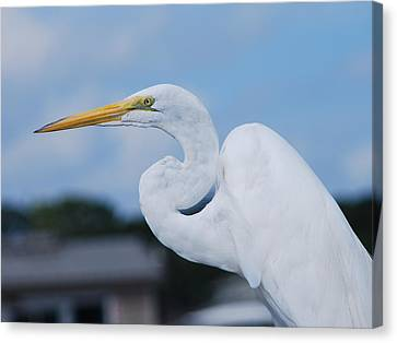 Canvas Print featuring the photograph White Egret by Margaret Palmer