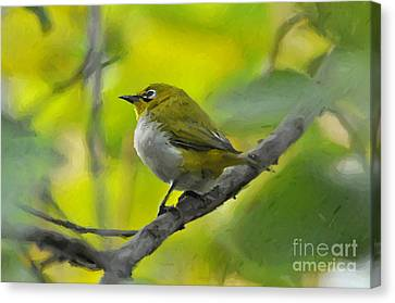 White Eye 1 Canvas Print