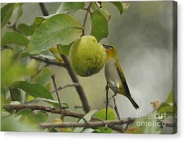 White Eye 2 Canvas Print