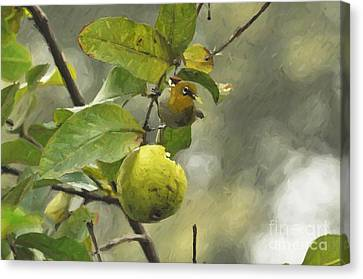White Eye 3 Canvas Print
