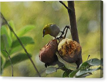 White Eye 4 Canvas Print