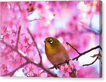 White Eye Bird Canvas Print by masahiro Makino