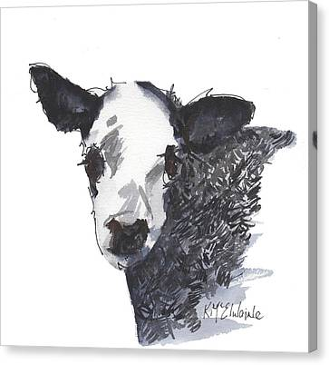 White Faced Hereferd Calf Baby Cow Canvas Print by Kathleen McElwaine