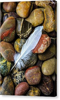 White Feather On River Stones Canvas Print by Garry Gay