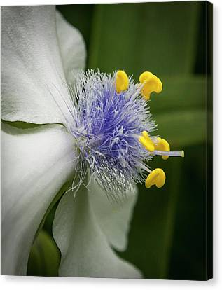 Canvas Print featuring the photograph White Flower by Jean Noren