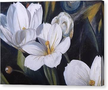 White Flower Study Canvas Print by Victoria Heryet
