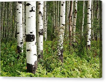 White Forest Canvas Print by Eric Foltz