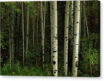 Canvas Print featuring the photograph White Forest by James BO Insogna