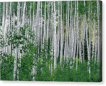 Canvas Print featuring the photograph White Forest by Tim Reaves