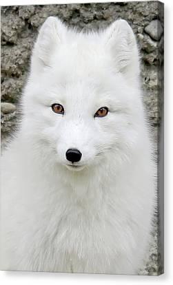 White Fox Canvas Print by Athena Mckinzie