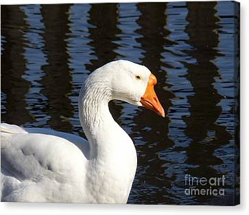 Canvas Print featuring the photograph White Goose by Elizabeth Fontaine-Barr