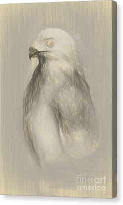 White Goshawk Artwork Canvas Print by Jorgo Photography - Wall Art Gallery
