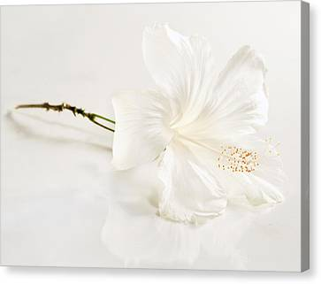 Michael Sweet Canvas Print - White Hibiscus Flower by Michael Sweet