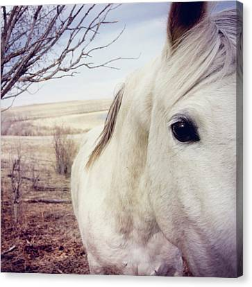 White Horse Close Up Canvas Print by Lori Andrews