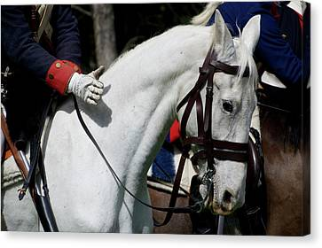 White Horse Good Boy Canvas Print by Thomas Woolworth