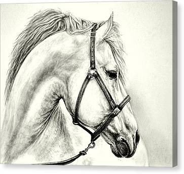 Canvas Print featuring the drawing White Horse by Heidi Kriel