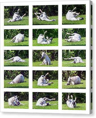 White Horse Montage Canvas Print by Brian Wallace