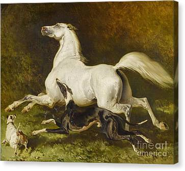 White Horse With Two Dogs Canvas Print
