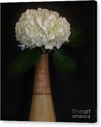 White Hydrangea In Gold Vase Canvas Print by Marsha Heiken