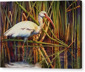 White Ibis Canvas Print by Sue Zimmermann
